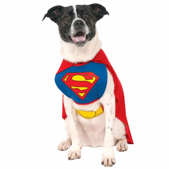 Superman-Dog-Costume.jpg