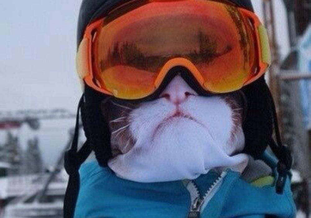 Teya Salat Animal Ski Mask Grumpy Cat Balaclava