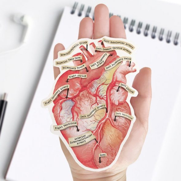 TheForestCloak Anatomical Human Heart Vinyl Sticker