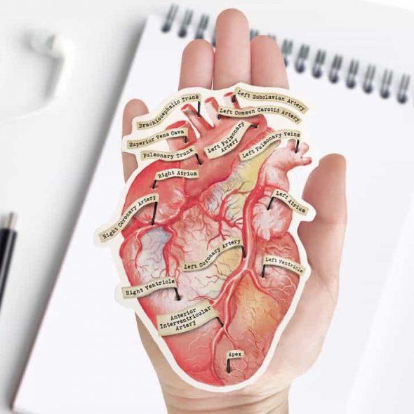TheForestCloak Anatomical Human Heart Vinyl Sticker
