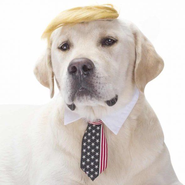 Trump-Halloween-Dog-Costume.jpg