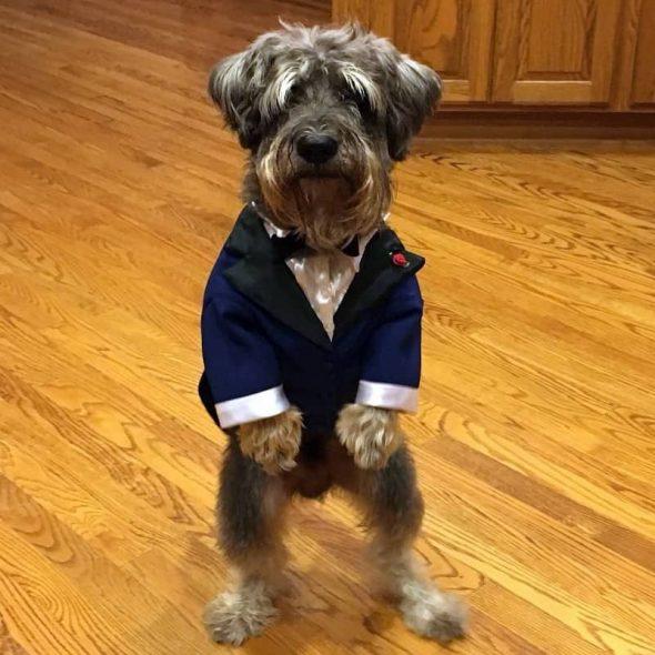 Tuxedo-for-dogs.jpg