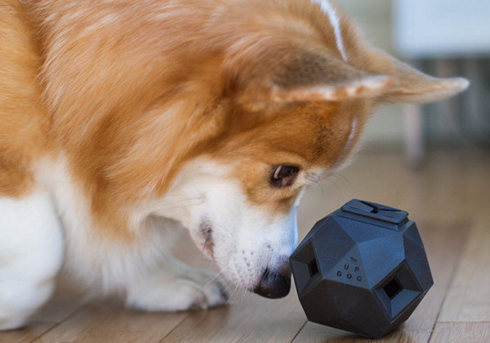 Up Dog Toys The Odin Increase Pet IQ