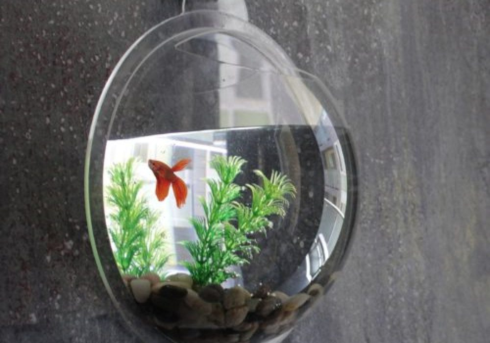 Wall Fish Bubble Cool Gift for Pet Lovers Gray Wall