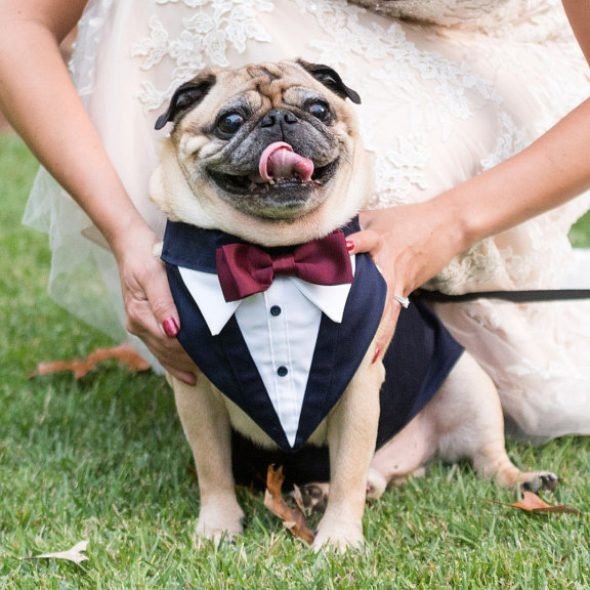 Wedding-Tuxedo-for-Dogs.jpg