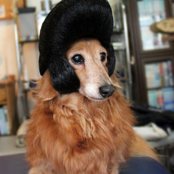 Wigs2you-Pompadour-Dog-Wig.jpg