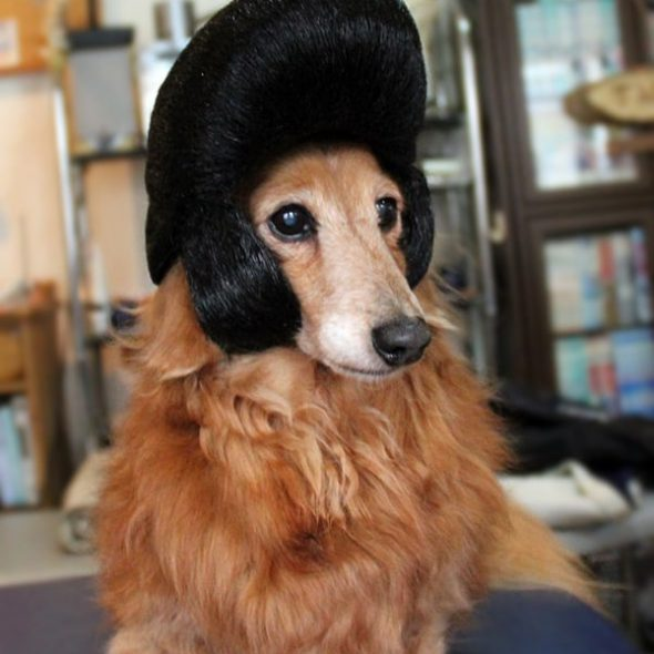 Wigs2you-Pompadour-Dog-Wig.jpg